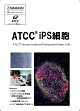 ATCC  iPS細胞カタログ( ACC : ATCC / American Type Culture Collection/#6799)