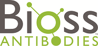 Bioss Antibodies