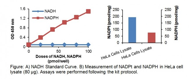 NADP/NADPH Quantitation Kit | ...