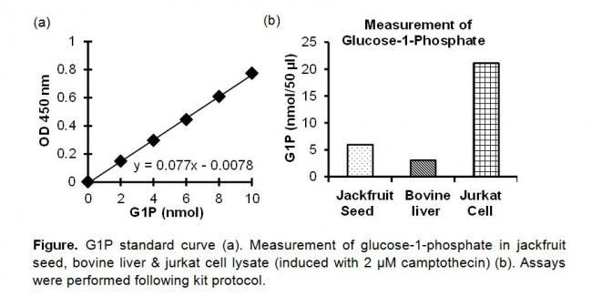 physio ex what is a glucose standard curve