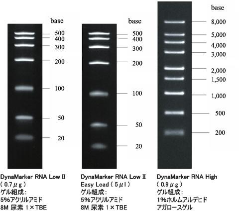 RNA 量が概算できるRNA分子量ラ...