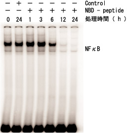 情報伝達因子阻害ペプチドセット