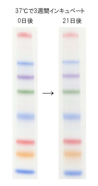 Protein MultiColor Ladder Marker, Stable, DynaMarker