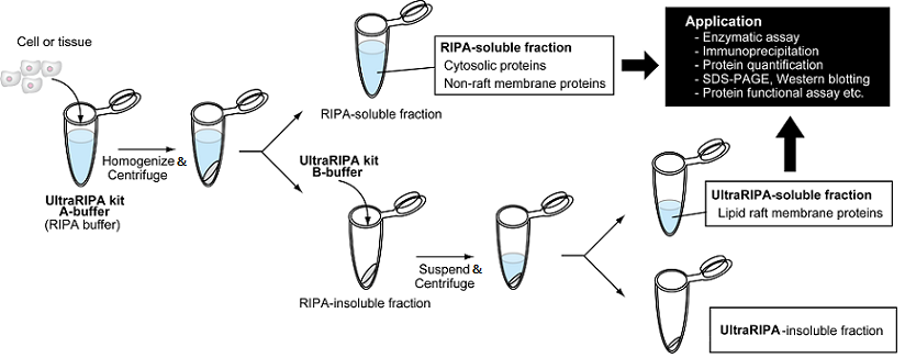Procedure of ULTRARIPA kit