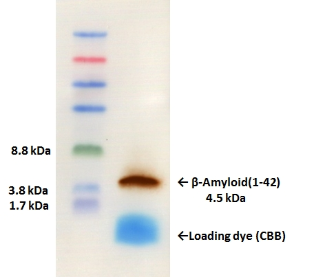 DynaMarker Protein MultiColor Stable, Low Rangeを用いたβ-Amyloid(1-42)検出実験
