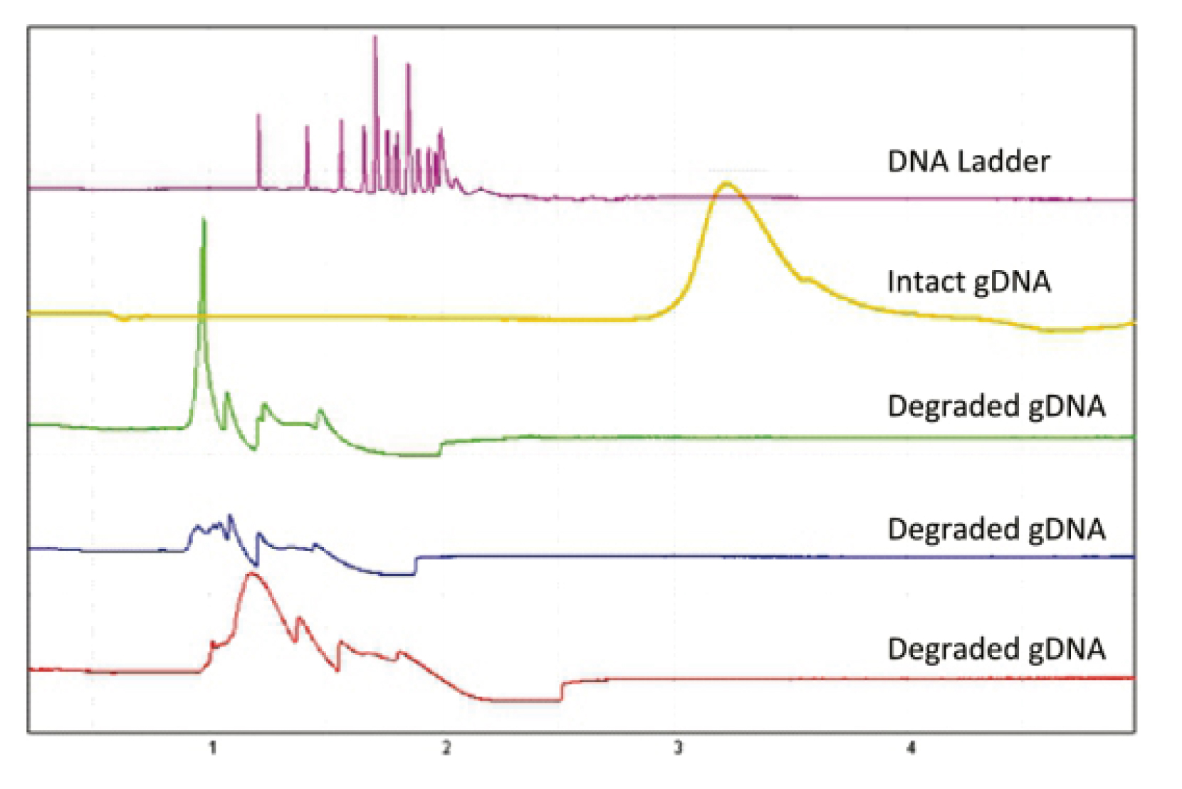 Qsep100 DNA Fragment Analyzer解析