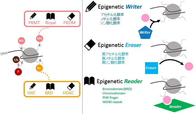 Eraser, Reader, Writerについて