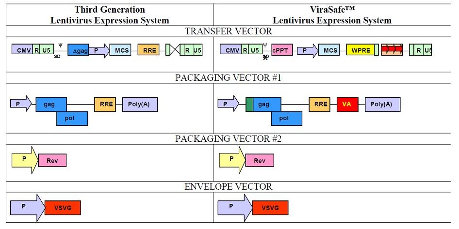 マウスおよびラット細胞のみに感染するレンチウイルス発現システム Virasafe Ecotropic