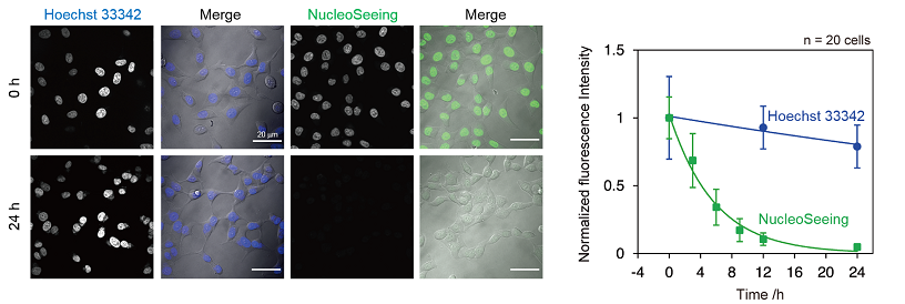 Fig.2 Reversible staining of NucleoSeeing