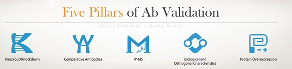 Five Pillars of Ab Validation