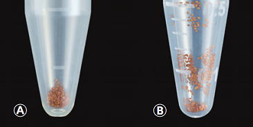 Comparison image of Arabidopsis seeds in tube