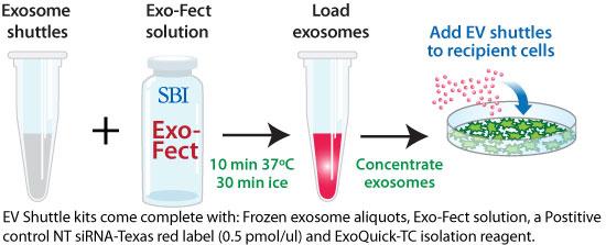 エクソソーム(エキソソーム)研究関連製品            Exosome(エキソソーム,エクソソーム)解析用ツール<特集>