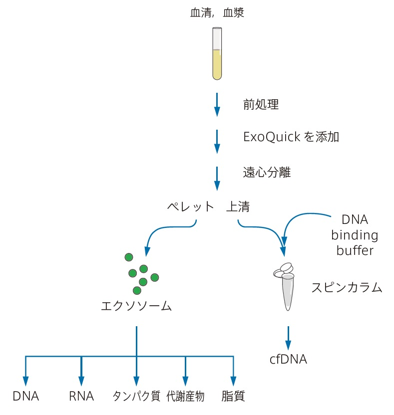Exosome(エクソソーム,エキソソーム)特集 XCF COMPLETE Exosome & cfDNA Isolation Kit