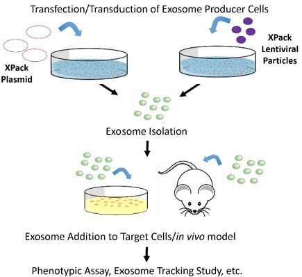 Exosome(エクソソーム,エキソソーム)特集 XPack <Exosome Protein Cargo Engineering System>