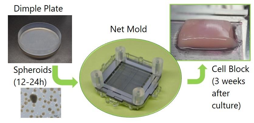 NetMold