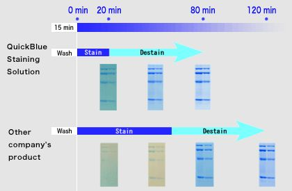 QuickBlue Staining Solution : High Sensitivity, Short time Protein CBB staining