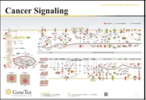 Cancer Signaling ポスター